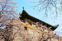 【网报指南】武汉大学2022年MBA/EMBA/MPA/MPAcc/MEM网报流程及注意事项